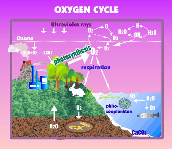 Oxygen Cycle In Nature Image Gallery oxygen c...